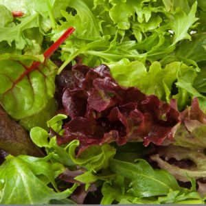 Mixed Green Salad leaves