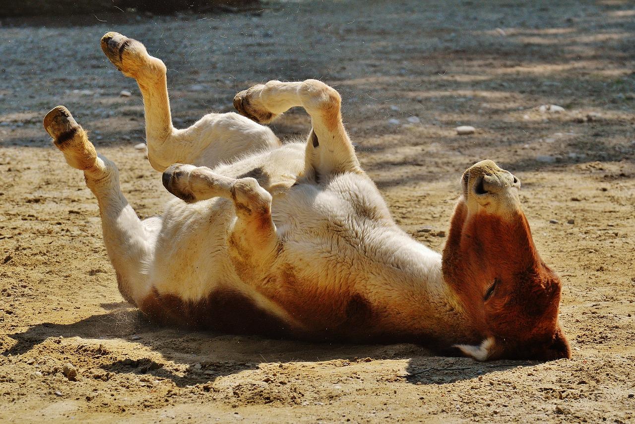 donkey-1342349_1280