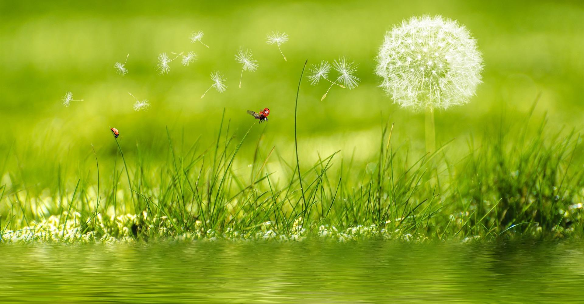 meadow-2225250_1920